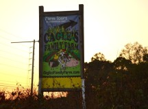 Cagle's Corn Maze