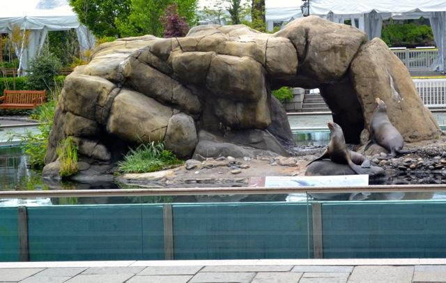 Seals at Central Park Zoo
