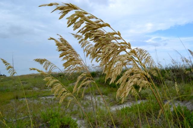 Sand Dune Flora