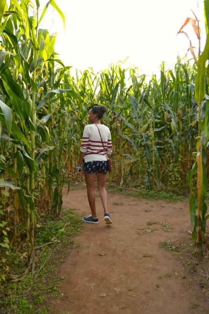 Tall Corn Maze Corn